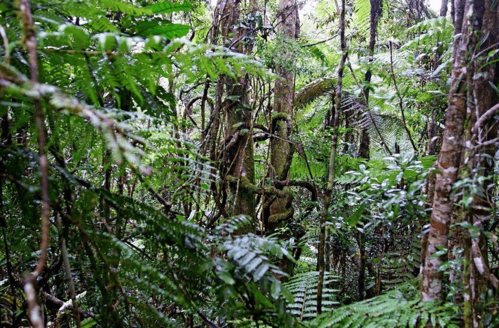 Тропические леса острова Мадагаскар