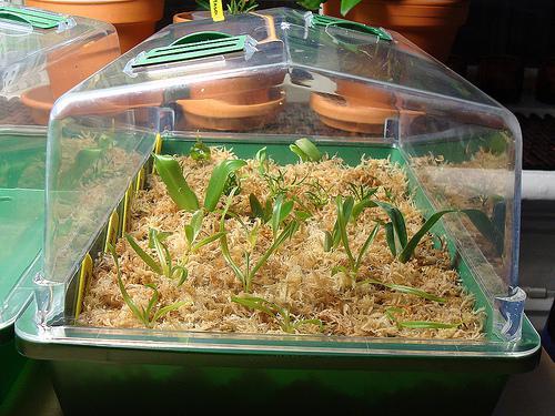 Растения в тепличке