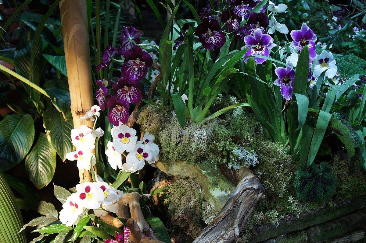 оформлении интерьера орхидея откуда она родом фото еще