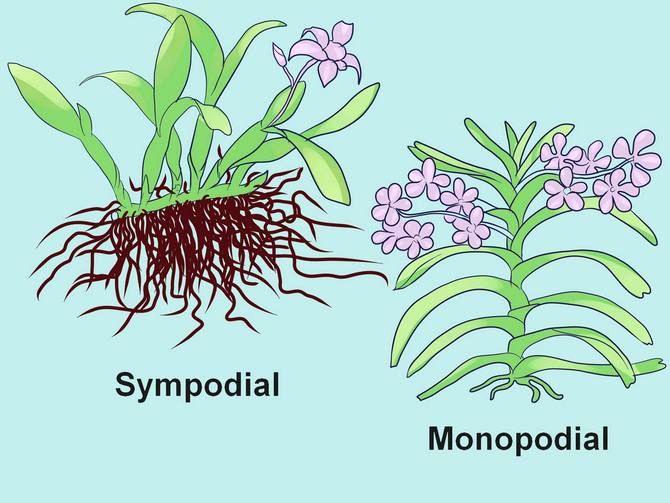 Разные виды орхидей