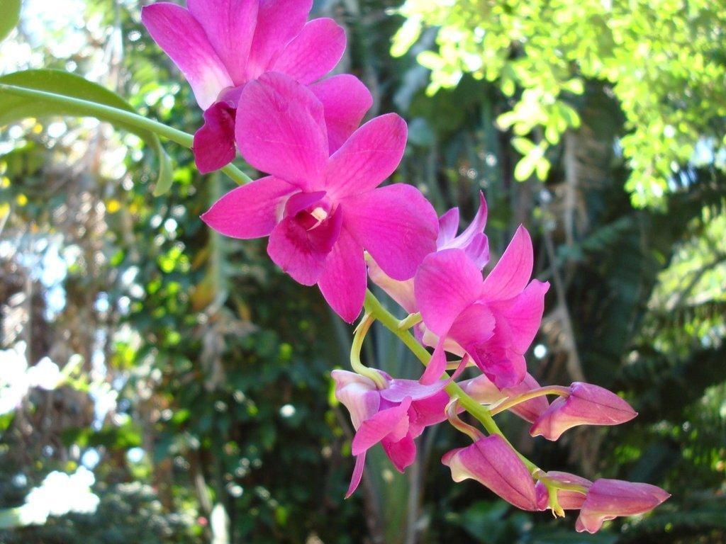 ростки орхидеи