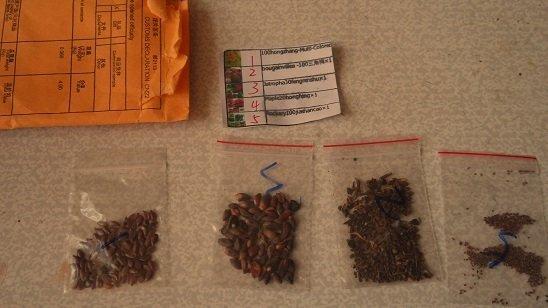 Как вырастить антуриум в домашних условиях из семян