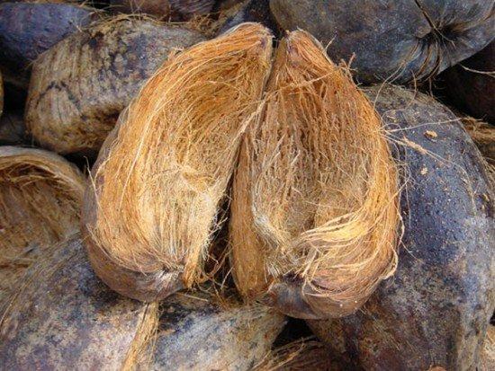 Волокно кокосового ореха
