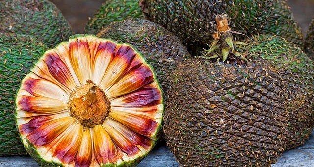 Плоды араукарии