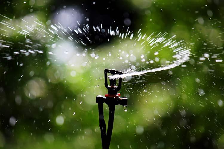 Дождевание