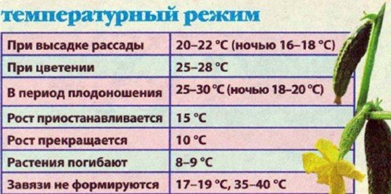 Как влияет температурный режим при выращивании зеленого лука тревожься Физически