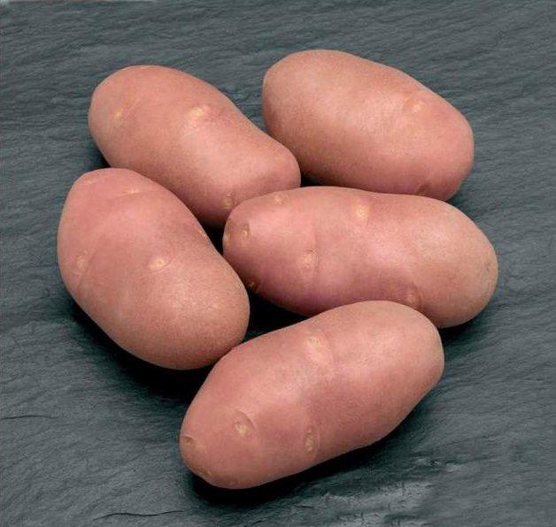 клубни картофеля Родриго