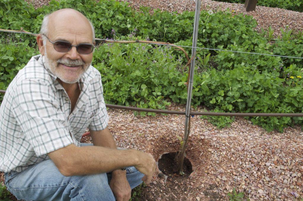 Садовник возле посаженного винограда