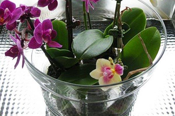 Орхидея не цветет что делать чтобы зацвела