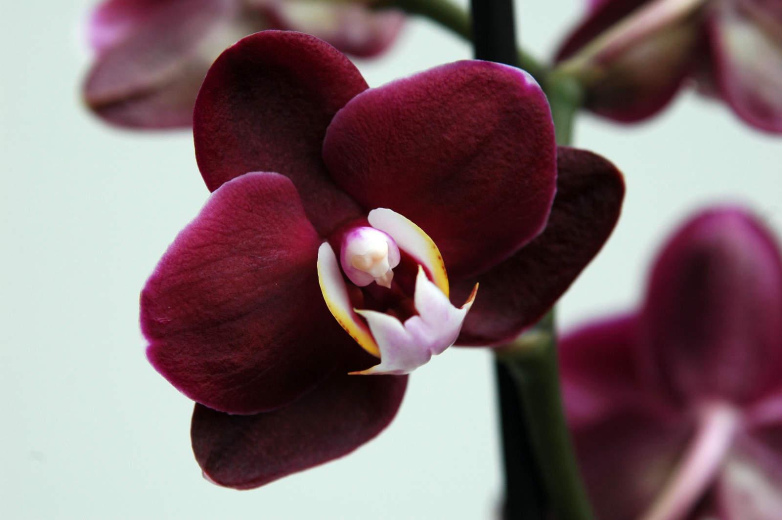 Как спасти орхидею: лечим и реанимируем королеву цветов
