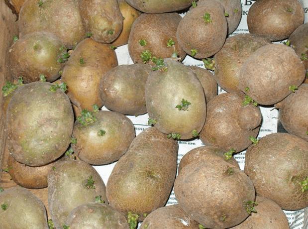 сможете купить выращивание картофеля в посуде убрать живот
