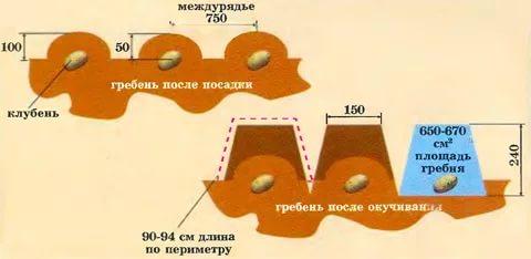 Схема посадки картошки в гребни