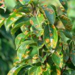 Ржавые листья