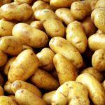Сорт картофеля Ариэль