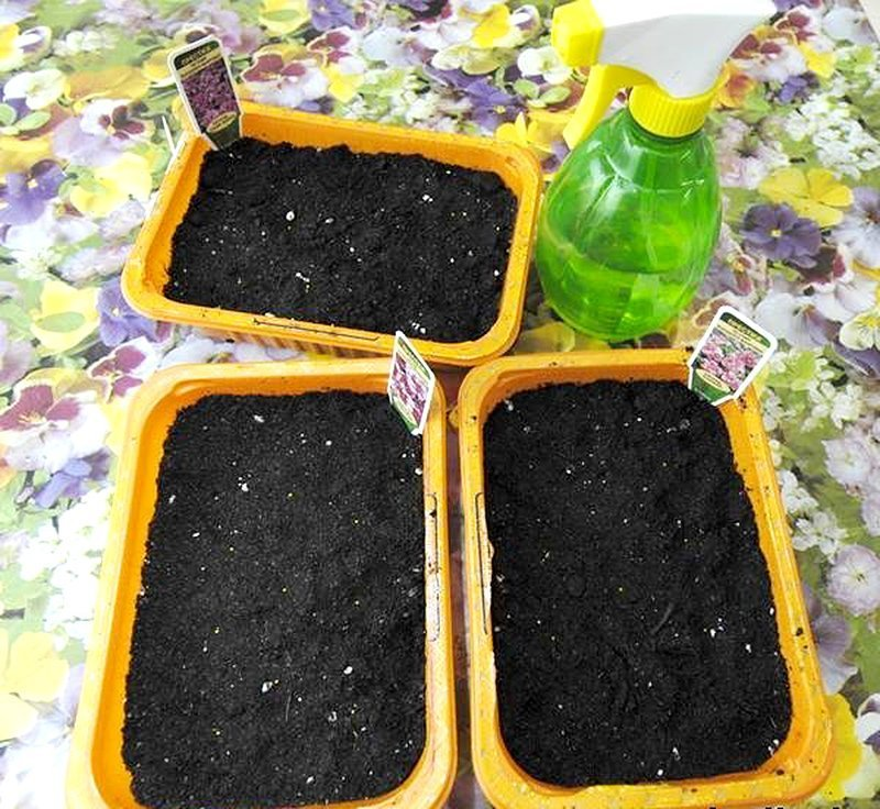 Ёмкости с посеянными семенами