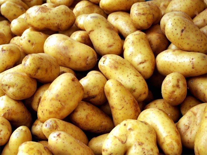 Картофель Фермер