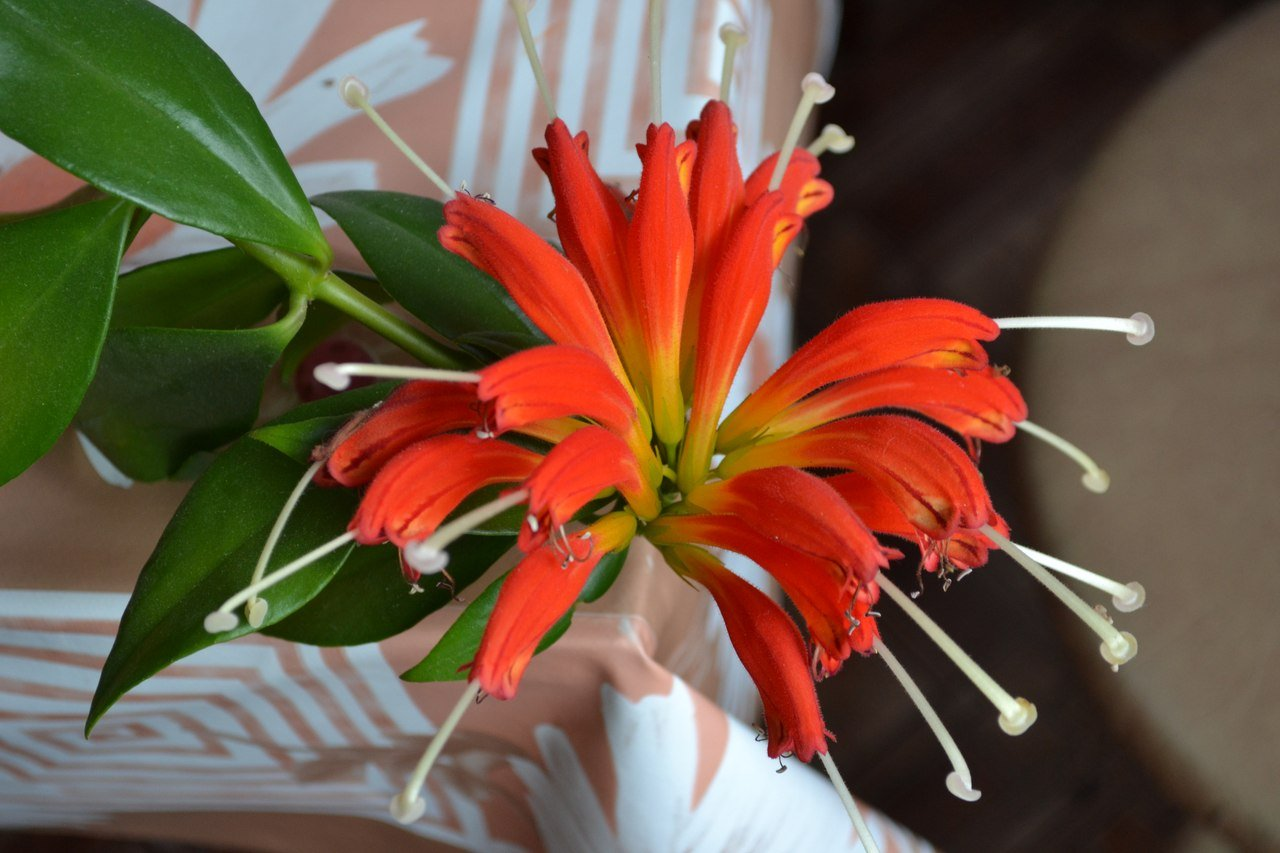 Фото комнатных цветущих растений красными цветами