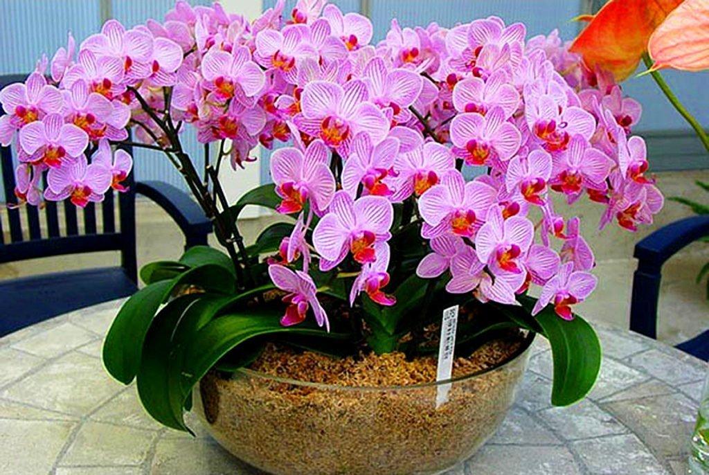 Как бороться с вредителями орхидей