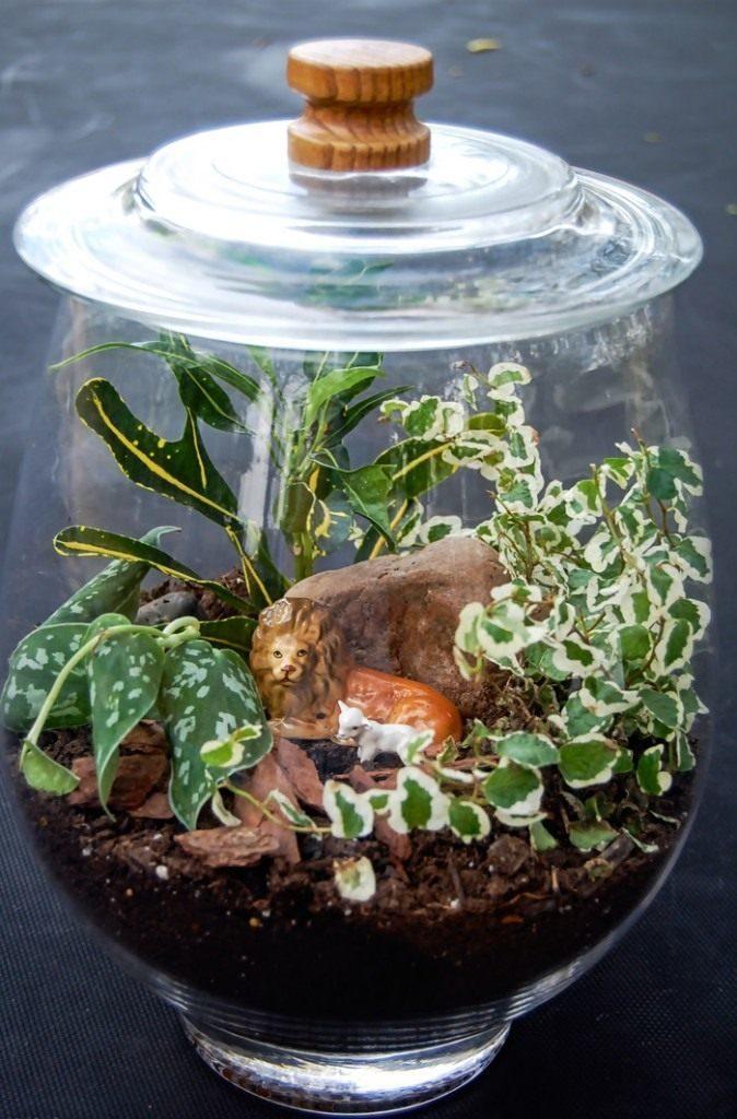 Флорариум с растениями