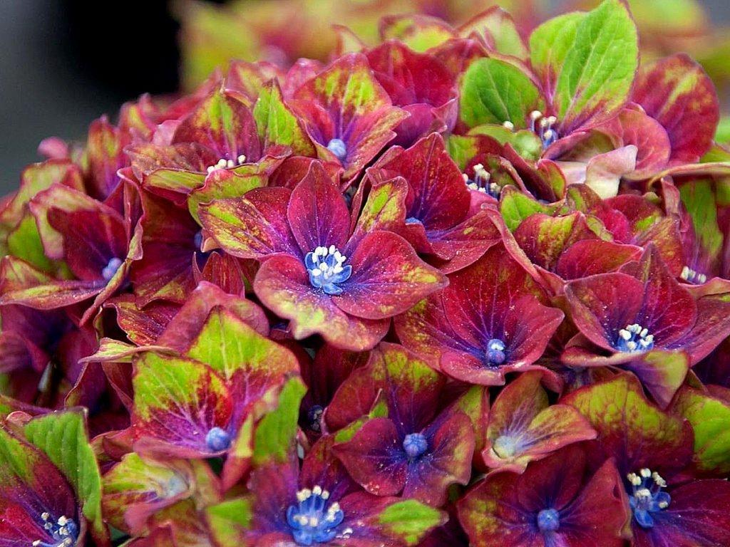Цветы микс посадка и уход фото