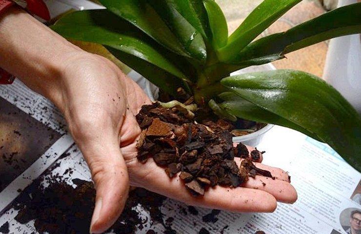 Кора для пересадки растения