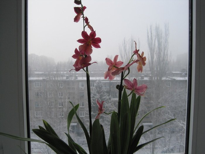 Камбрия у окна