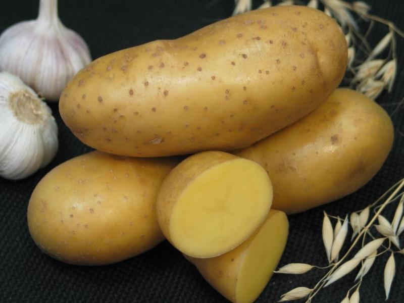 Картофель Иператрица
