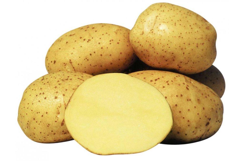 Клубень картофеля в разрезе