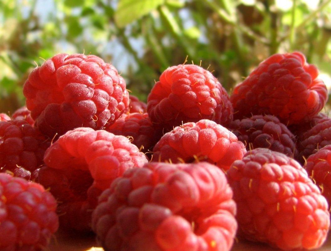 Шапка Мономаха — крупноплодный урожайный сорт ремонтантной малины