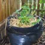 Картофель, растущий в мешке