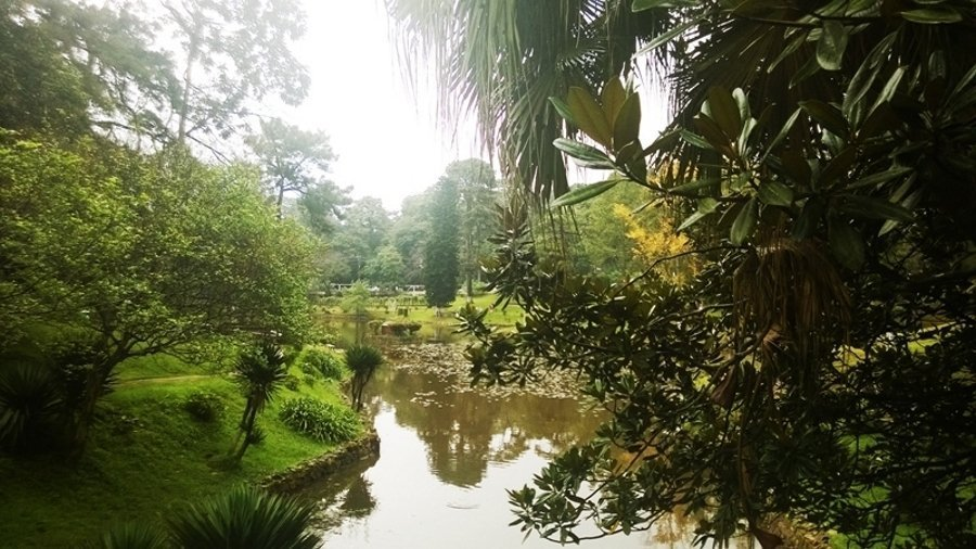 субтропический лес