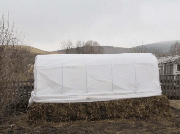 Огуречный парник на навозной подушке