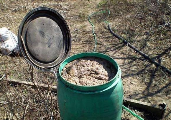 Органическая подкормка из куриного помёта