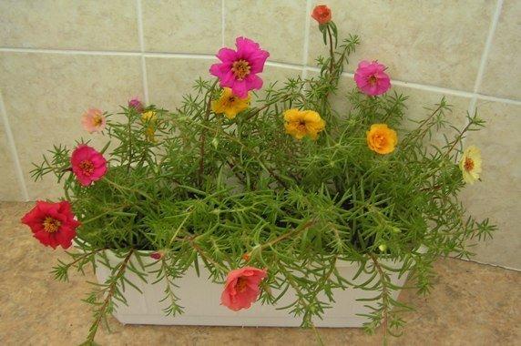 Цикл развития покрытосеменных растений схема