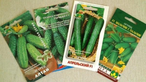 Пакетики с семенами огурцов
