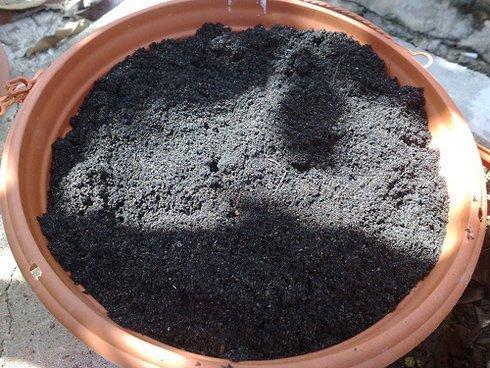 Почва для фрезии
