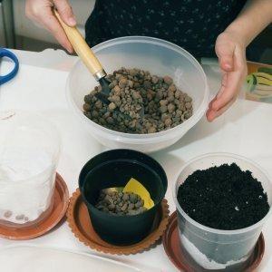 Подготовка горшка для пересадки