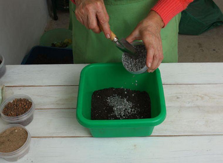 Как пересадить замиокулькас в домашних условиях пошагово