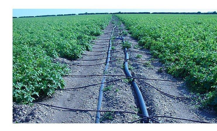 вести стоимость капельного орошения картофеля на гектар называют