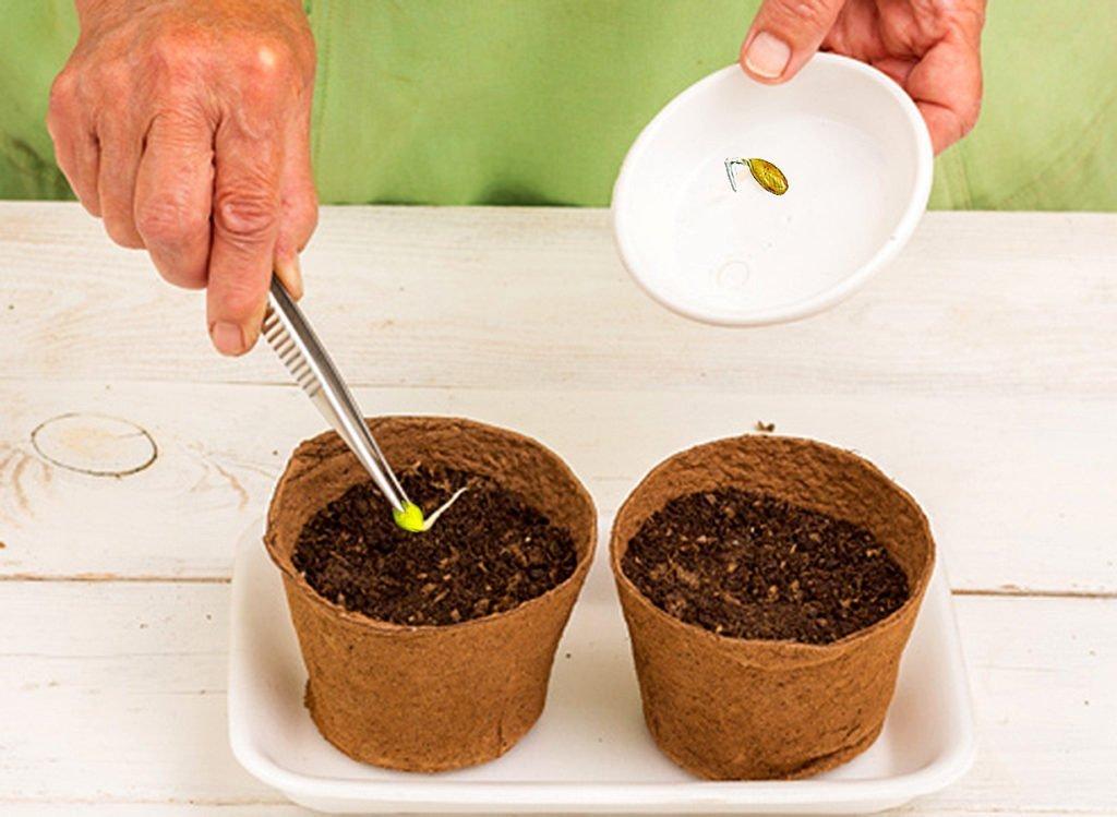 семена сажают в грунт