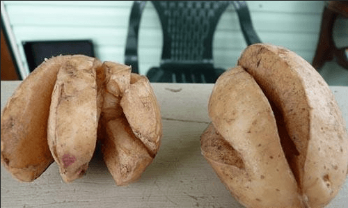 Потрескавшийся картофель