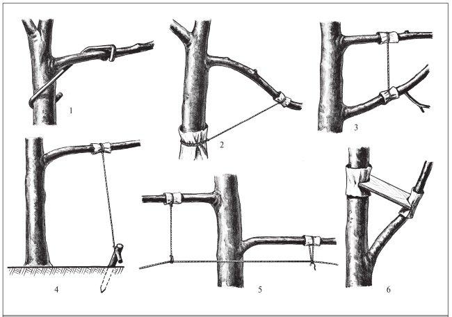 Придаем ветвям горизонтальную форму