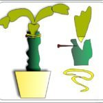 Прививка декабриста на кактус