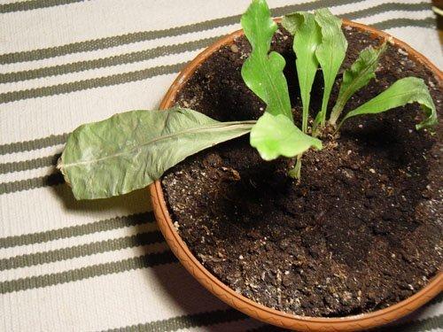 Проблемы при выращивании