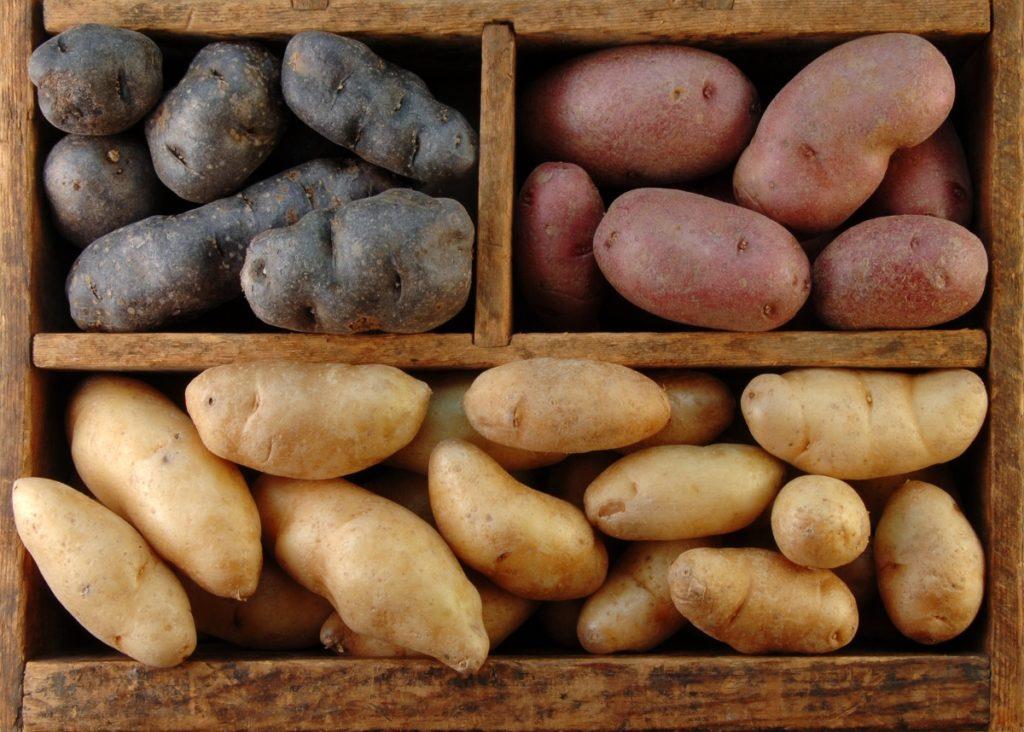 Сорта картофеля с кожицей разного цвета