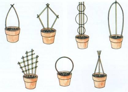 Разновидности опор для лианы