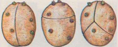 Резка картофеля