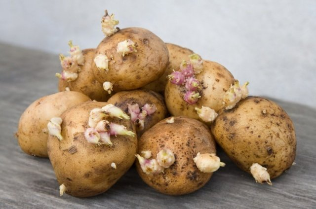 Картофель Джелли 2