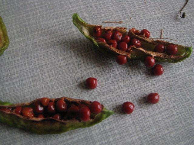 Семена глориозы