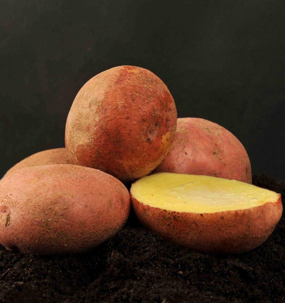 Семенной материал для посадки клубней картофеля Журавинки